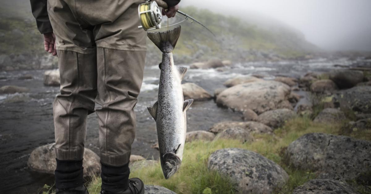 Fisking for lærevillige nybegynnere
