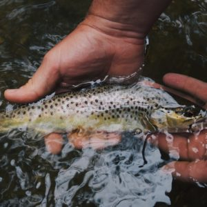 Hvordan tilberede fisk i naturen