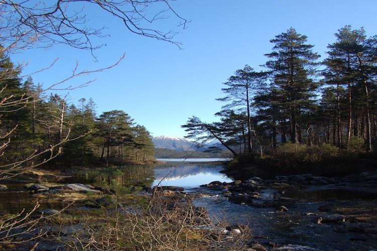 Bergens jæger- og fiskeforening